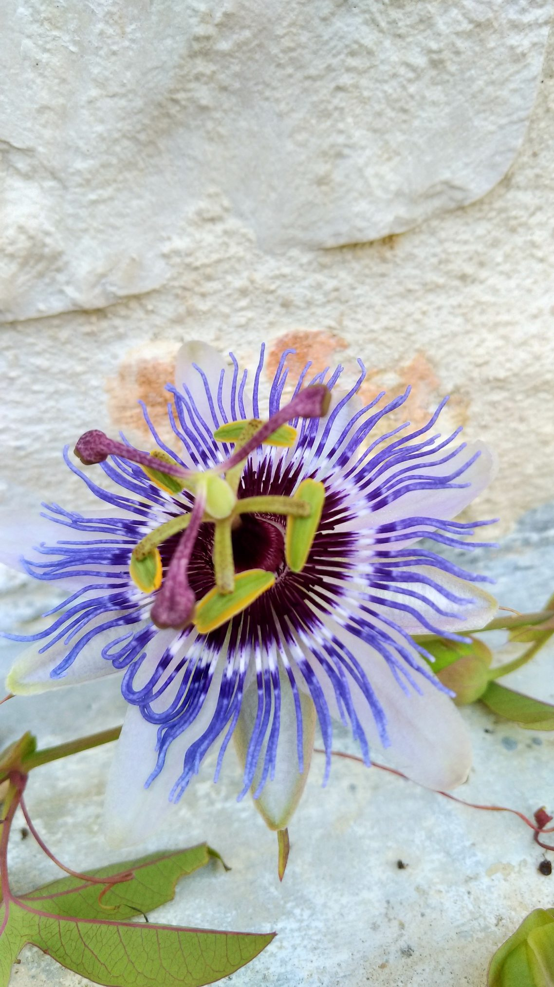 Trulli Eutopia - natura fiore